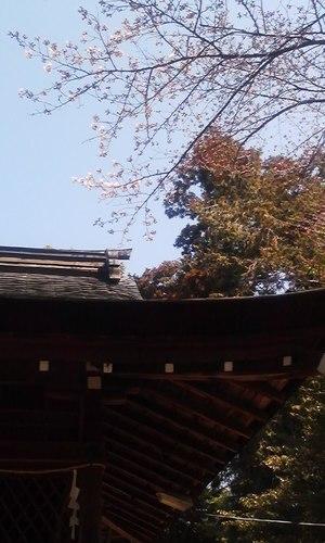 Sakurakaika_eda