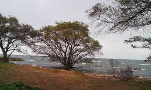 Biwako_15