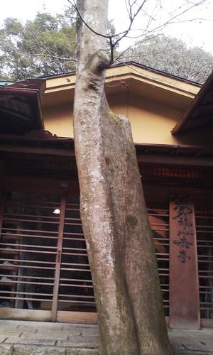 Arasiyama_yusaitei