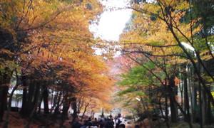 Daigoji_kouyou2_2