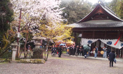 Harumaturi_honbi_keidai