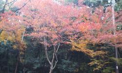 Hiyositaishasan_kouyou1_2