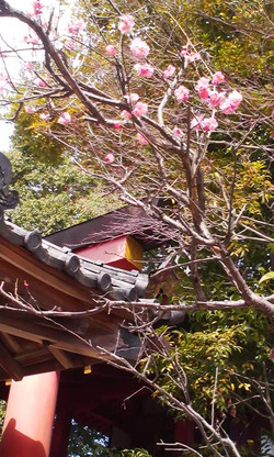 Nara_kagamijinjyasan