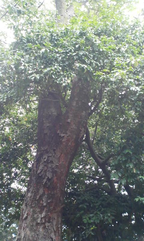 鎮守の森で、祖先の御霊を送って…。